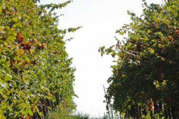 location chambre d'hotes vignes oléron